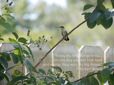 Hummingbird On Crepe Myrtle Poster