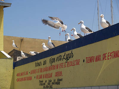 Ensenada Harbour And Fishmarket 40 Poster