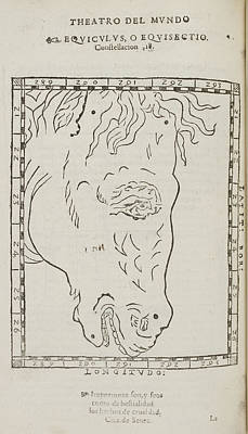 Equiculus Star Constellation Poster by British Library