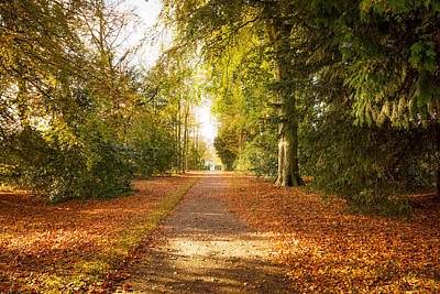 An Autumn Carpet Of Golden Leaves Poster