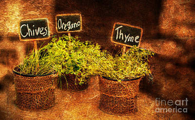Essential Herbs Poster by Patricia Awapara