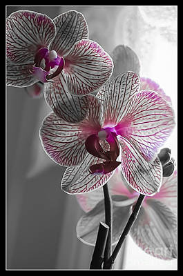 Ethereal Orchid Poster