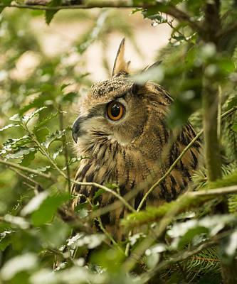 Eurasian Eagle-owl 2 Poster