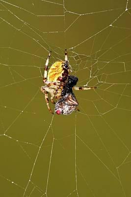 European Garden Spider And Prey Poster by Heiti Paves