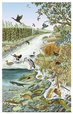 European River Life, Artwork Poster by Science Photo Library