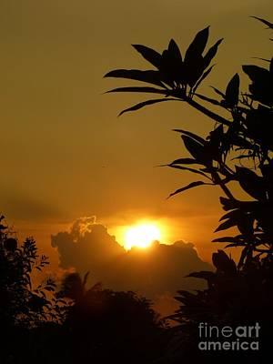 Evening Sun Poster