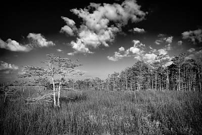 Everglades 9574bw Poster