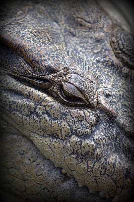 Everglade's Aligator Eye Poster by James Hammick
