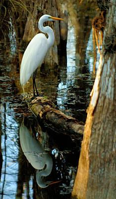 Everglades Egret Poster by Daniel Woodrum