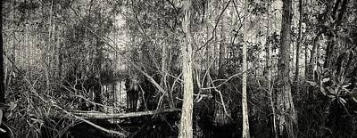 Everglades Swamp-1bw Poster