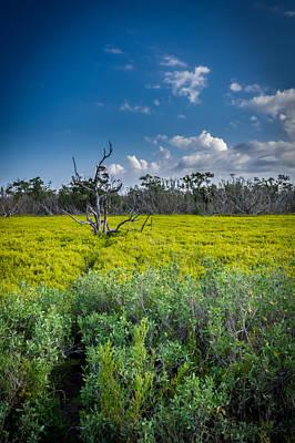 Everglades Tree Poster