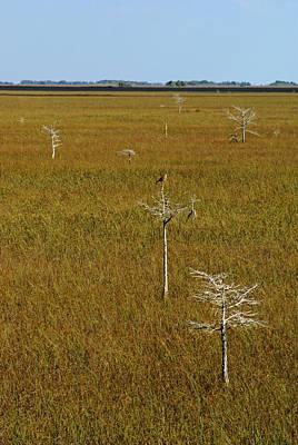 Everglades View Poster by Daniel Woodrum