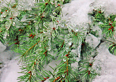 Evergreen Icicles I Poster by Chuck Flewelling