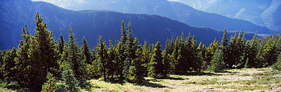 Evergreen Trees With Mountains Poster by Panoramic Images