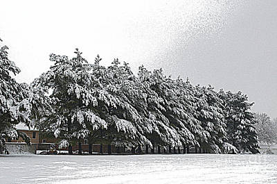 Evergreens In Snow Poster