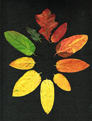 Evolution Of Autumn Bk Poster