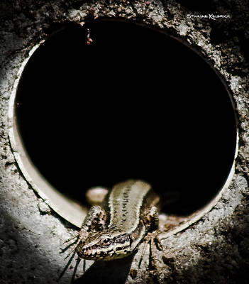 Poster featuring the photograph Exit Of Lizard Devil by Stwayne Keubrick