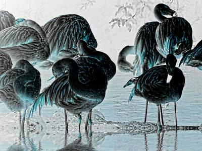 Exotic Flamingos Poster by Sharon Lisa Clarke