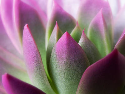 Exotic - Pink Purple Green Flower Landscape Photograph Poster by Artecco Fine Art Photography