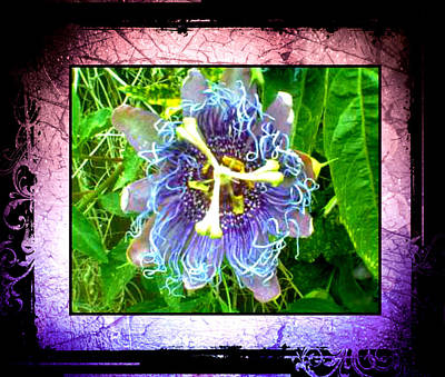 Poster featuring the photograph Exotic Strange Flower by Absinthe Art By Michelle LeAnn Scott