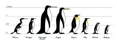 Extinct And Living Penguin Comparison Poster by Claus Lunau