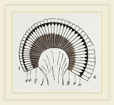 Eye Of Dragonfly Poster by Litz Collection