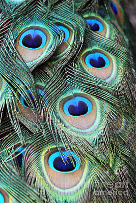 Poster featuring the photograph Eye Of The Peacock #2 by Judy Whitton