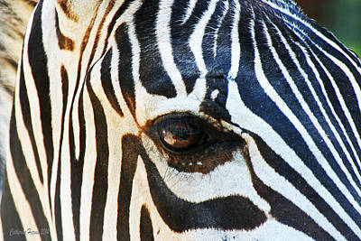 Eye Of The Zebra Poster by Catherine Harms