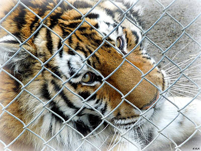 Eyes Of Captivity Poster by Heidi Manly