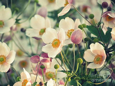 Fabulous  Anemones Poster by France Laliberte