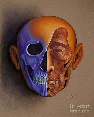 Face Anatomy Poster by Tish Wynne