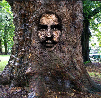 Face In A Tree Poster by Mary M Collins
