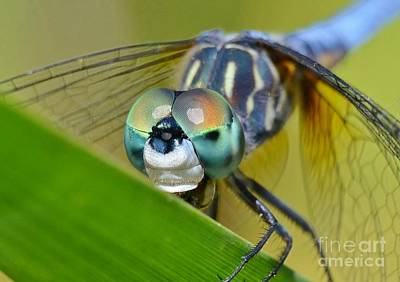 Poster featuring the photograph Face Of The Dragonfly by Kathy Baccari