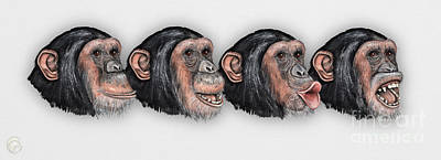 Facial Expressions Of Chimpanzees Pan Troglodytes - Zoo - Mimik Schimpansen - Stock Illustration Poster by Urft Valley Art