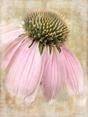 Faded Coneflower Poster