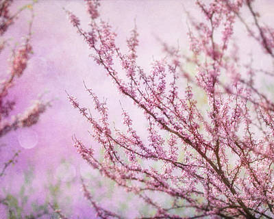 Fairytale Redbud In Pink Poster