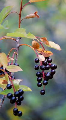 Fall Berries #2 Poster by Gina Gahagan