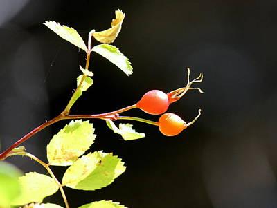 Fall Berries #3 Poster by Gina Gahagan