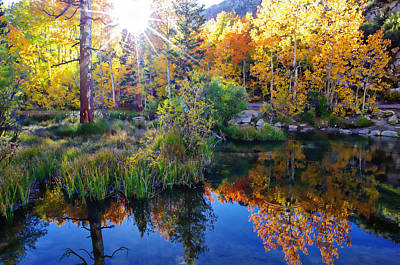 Fall Color Reflection Along Bishop Creek Poster