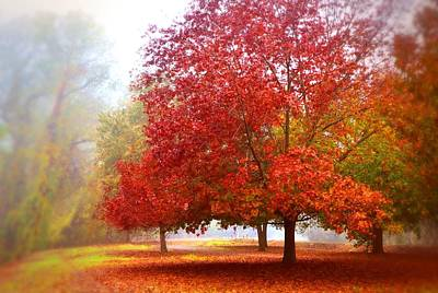 Fall Colored Trees Poster