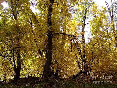 Fall Colors 6169 Poster