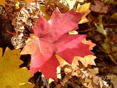 Fall Colors 6313 Poster