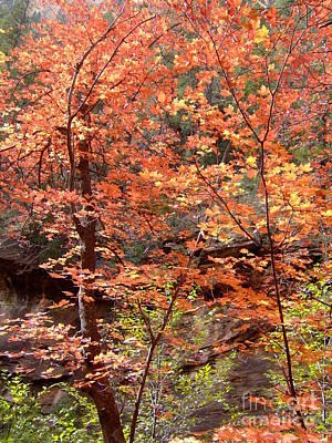 Fall Colors 6335 Poster