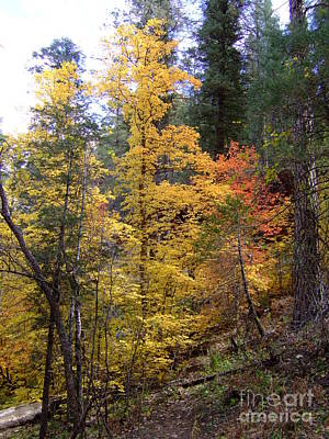 Fall Colors 6368 Poster