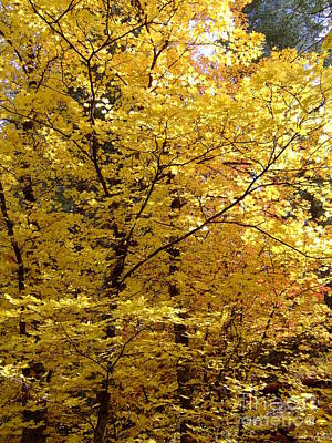 Fall Colors 6371 Poster