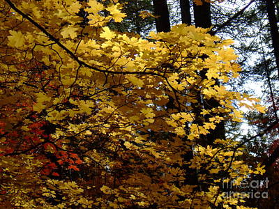 Fall Colors 6372 Poster