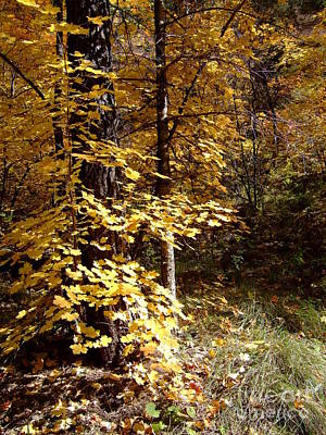 Fall Colors 6404 Poster