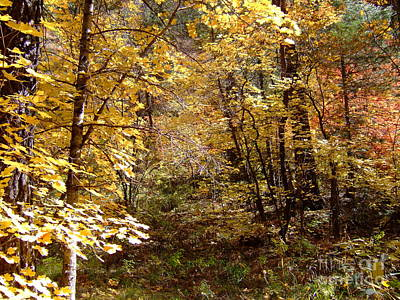 Fall Colors 6405 Poster