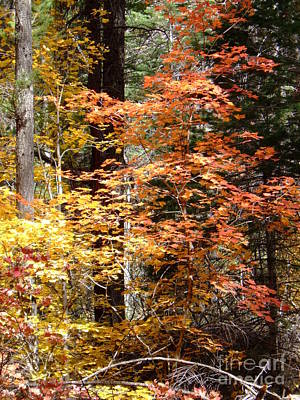Fall Colors 6412 Poster