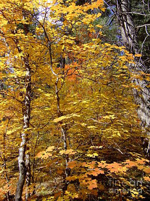 Fall Colors 6446 Poster